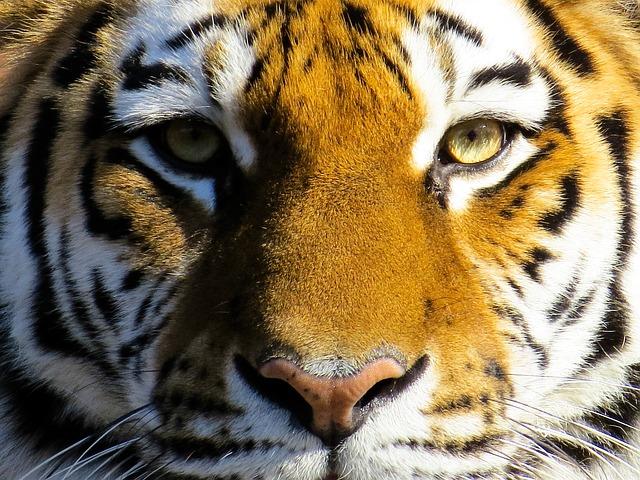 マネーの虎にみる人物評価